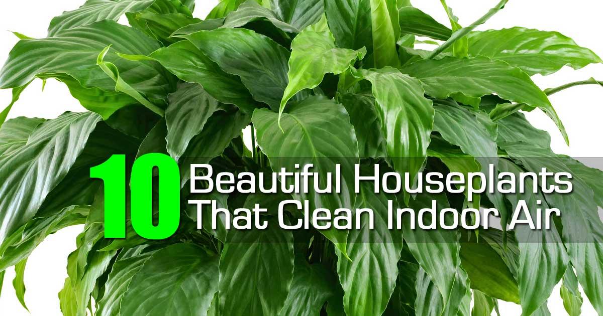 Beautiful Houseplants Clean Indoor Air