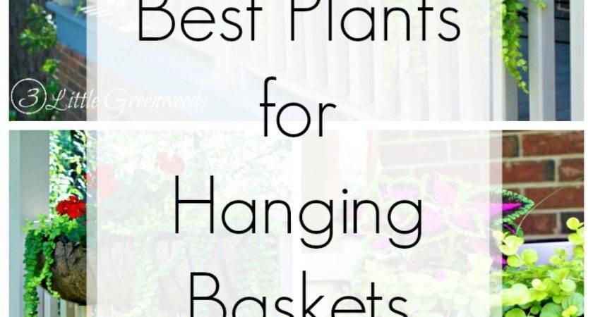Best Plants Hanging Baskets Front Porches