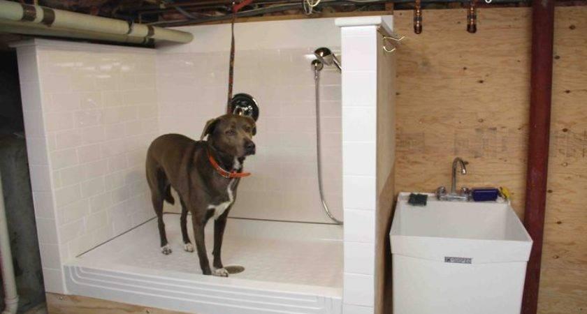 Build Dog Wash Station Diy Pets Pinterest