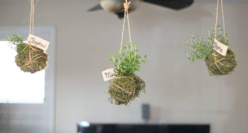 Diy Indoor Hanging Herb Garden Bump Into Reality
