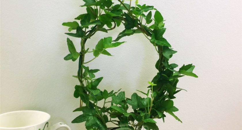 English Ivy Hedera Evergreen Hardy Wall Climbing Hanging