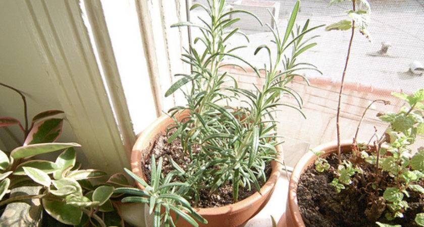 Grow Thyme Indoors