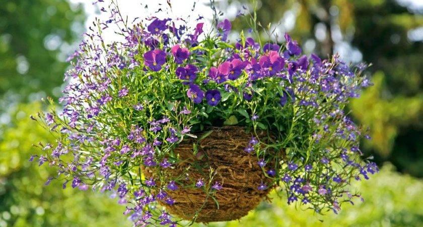 Hardy Plants Hanging Baskets Bavinckschool Info