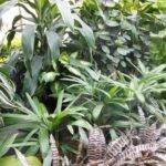 Indoor House Plants Names Not Only