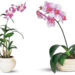 Indoor Plants Purify Air Around Naturally Dendrobium