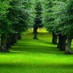 Jim Robinson Tree Care