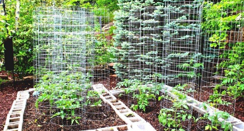 Kitchen Gardening Ideas Archives Garden Trends