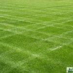 Lawn Mowing Lawns