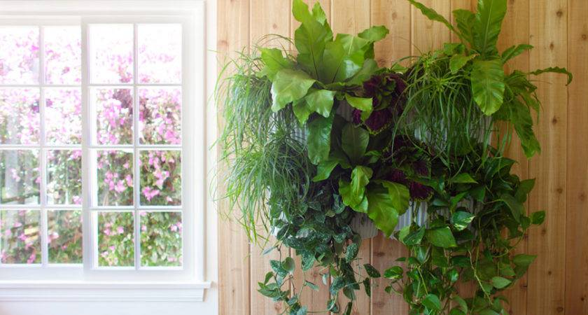 Living Wall Planter Pack
