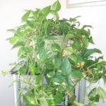 Maintain Houseplants Kenneth Crawford
