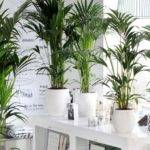 Matelic Names Indoor Tropical Plants
