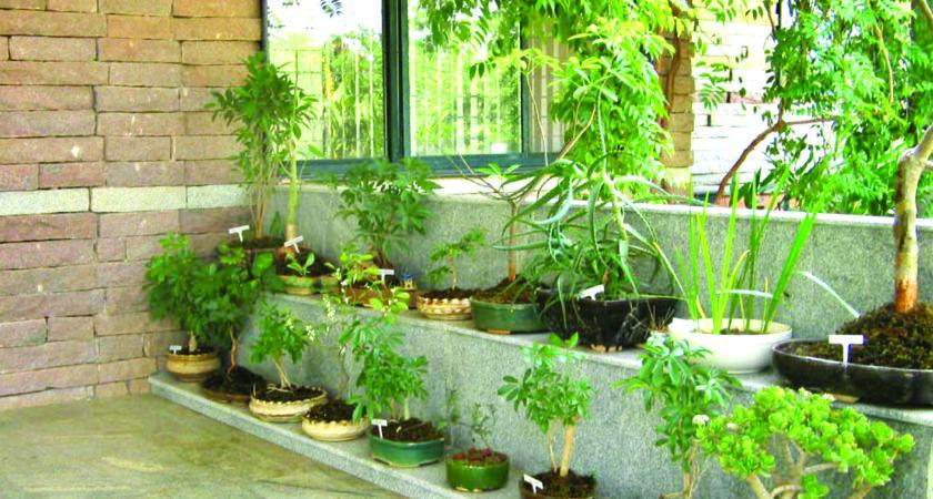 Small Home Garden Design Ideas Amazing Elegant Front