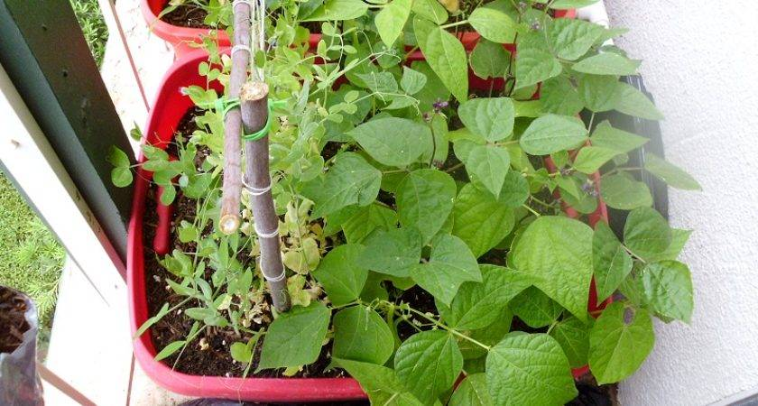 Start Container Garden Less Than Greens