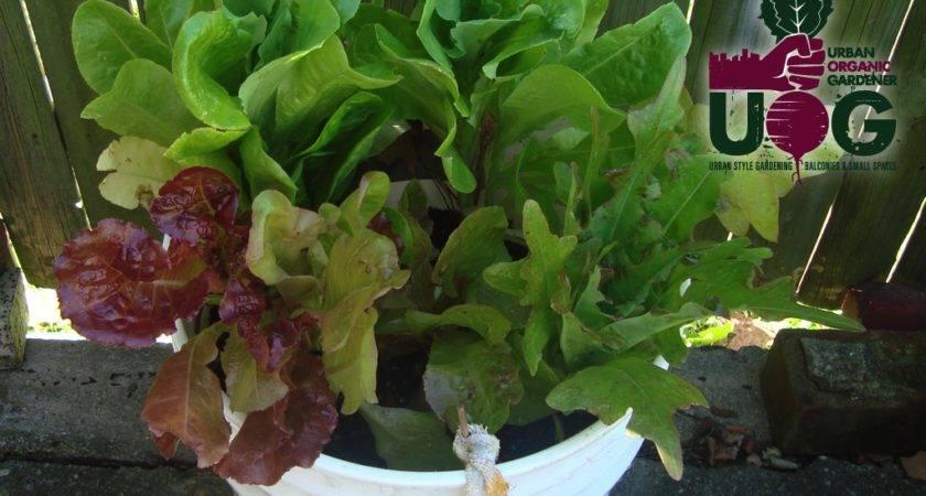 Start Container Gardening Urban Organic Gardener