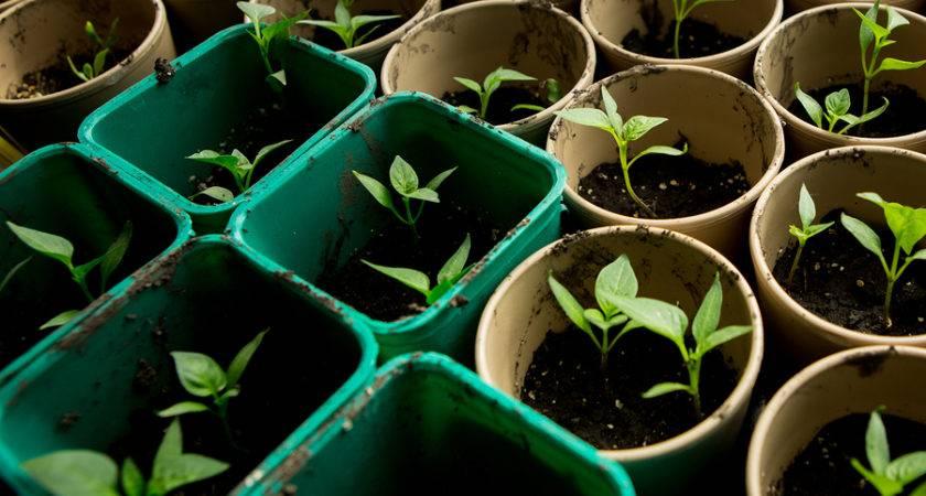 Start Container Vegetable Garden Clueless Gardener