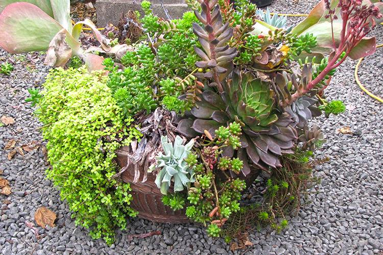 Time Even Best Succulent Container Gardens Start Look
