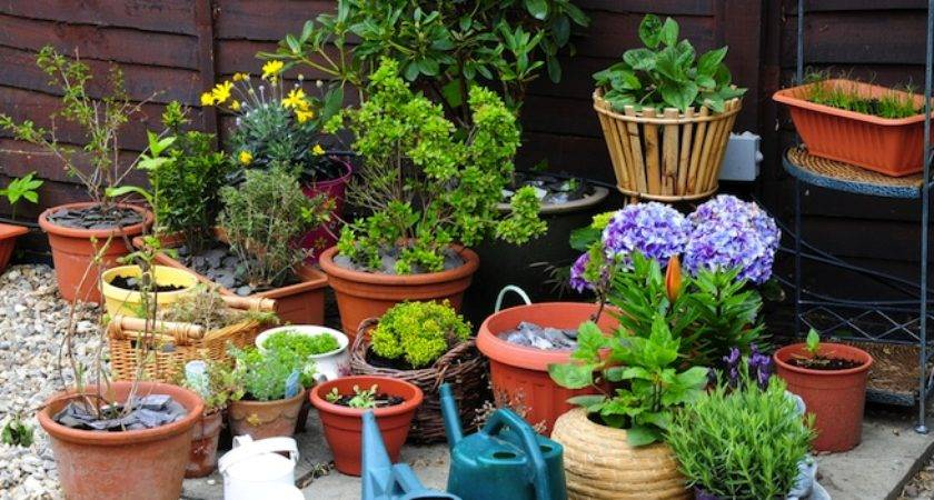 Want Start Your Own Container Garden Here