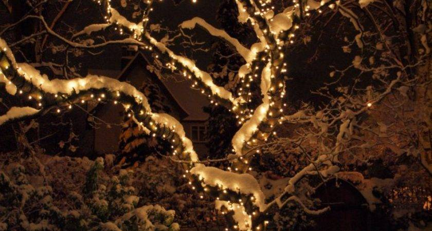 Wrapping Evergreens Bushes Christmas Lights Trees